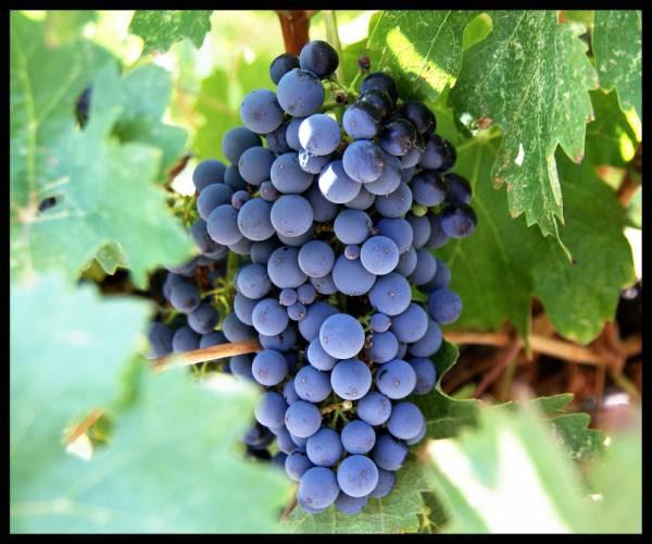 spiritually fruitful